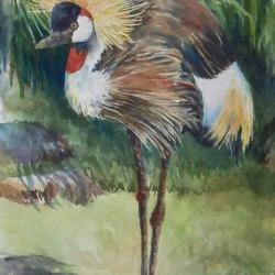 "African Crowned Crane 14""x23"" watercolor"