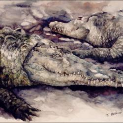 """Cocodrilario 20""""x30"""" watercolor"""